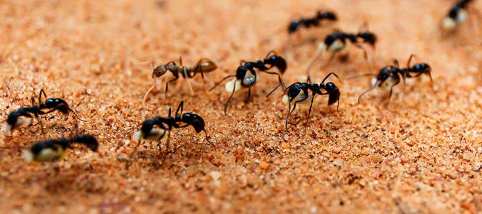 Ants control in singapore