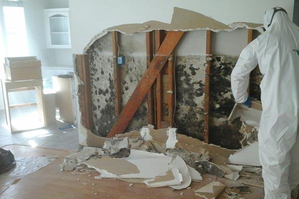 Mold damage service